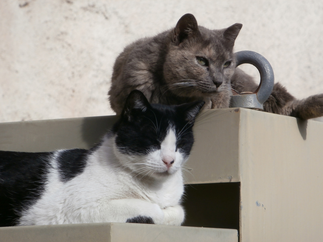 Two proud male stray cats at the yard of the new Acropolis Museum in Athens.