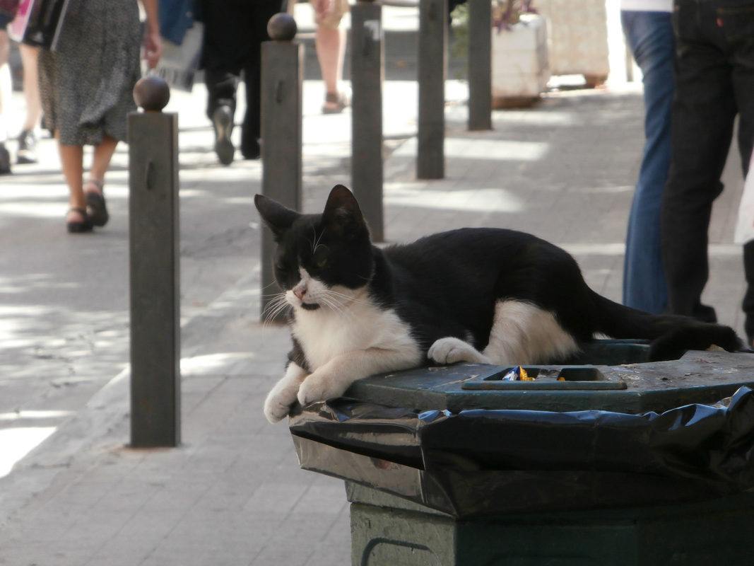 The playful black&white cat by the elementary school of Adrianou Street in Plaka.